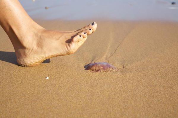 Не наступайте на маленьких медуз