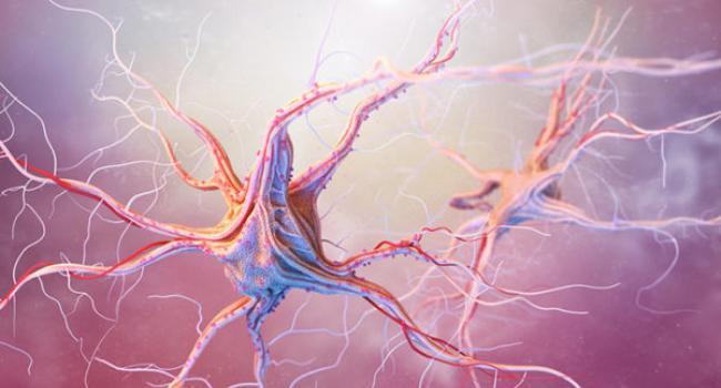 Регенерация клеток